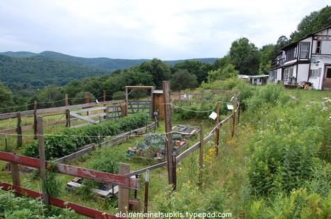 Garden_with_deer_fencing