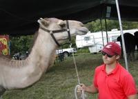 Joe_camel
