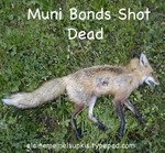 Muni_bonds_shot_dead