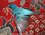 Dead_blue_bird_of_happiness_3