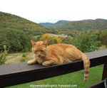Tigger_sleeping_on_railing