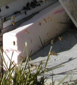 Bees_outside_hive_in_january