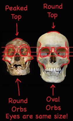 _hobbit_vs_human_skulls