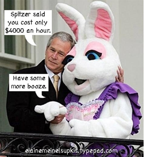 Bush_bunny_2