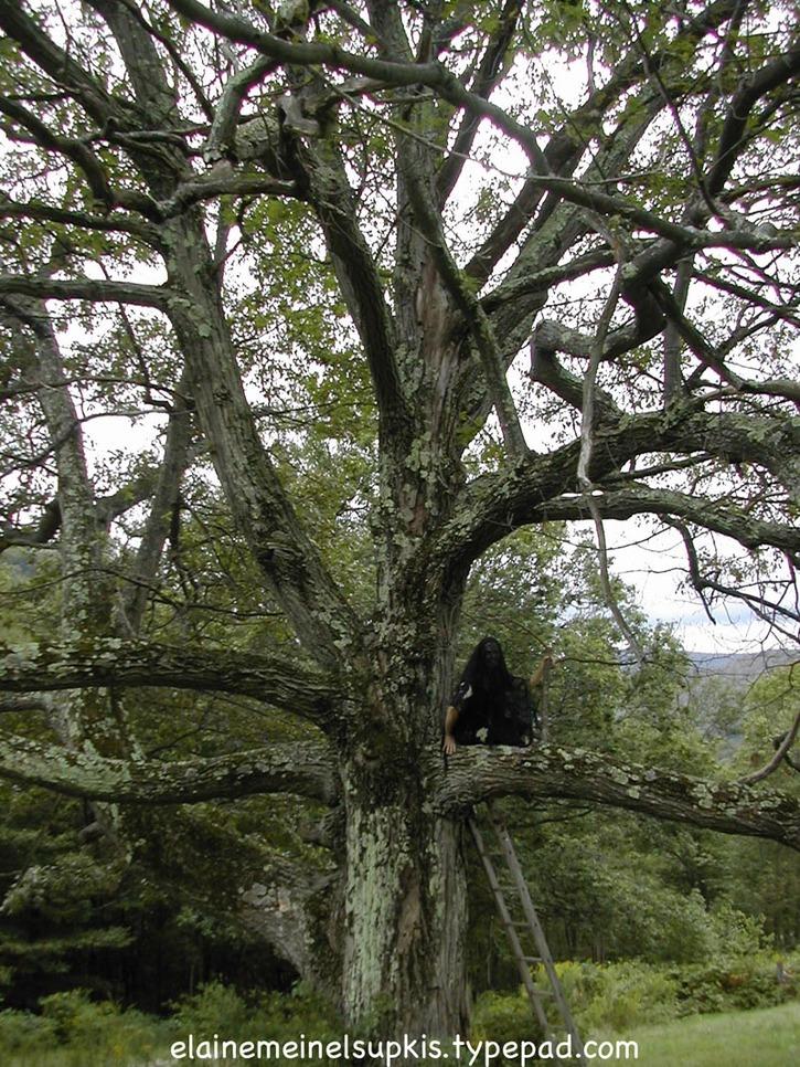 Ancient_oak_tree