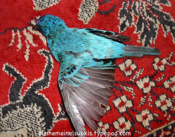 Dead_blue_bird_of_happiness