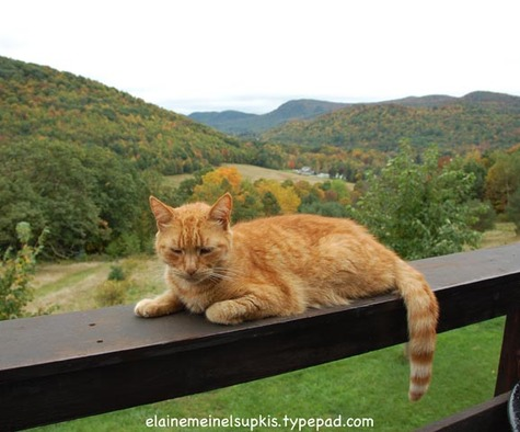 Tigger_sleeping_on_railing_2