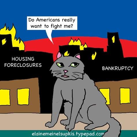 Persian_cat_usa_burning_2