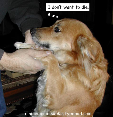 Puppy_wants_to_live_too_big