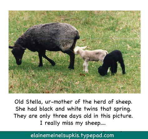 Stella_and_her_baby_lambies