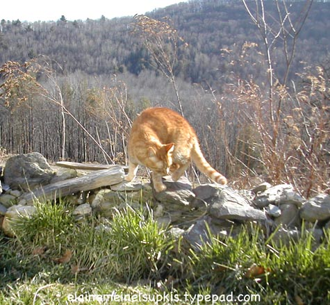 Tigger_on_stone_wall_january