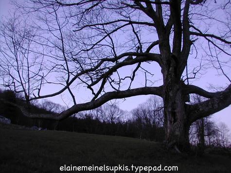 Fractal_oak_tree